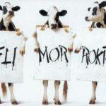 cowpic6